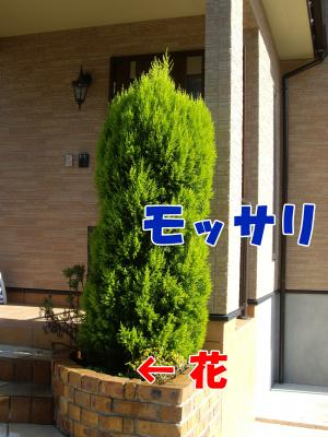 IMGP5544_convert_20081105165900.jpg