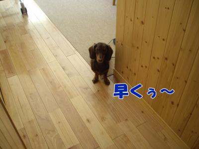 IMGP5546_convert_20081105165927.jpg