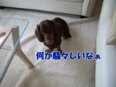 IMGP5581_convert_20081110235449.jpg