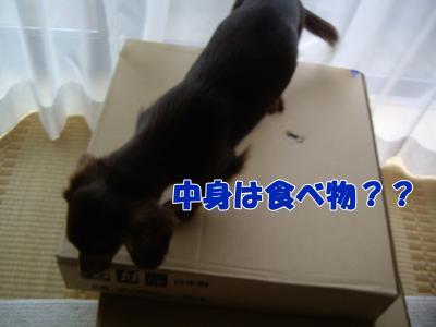 IMGP5583_convert_20081110235500.jpg
