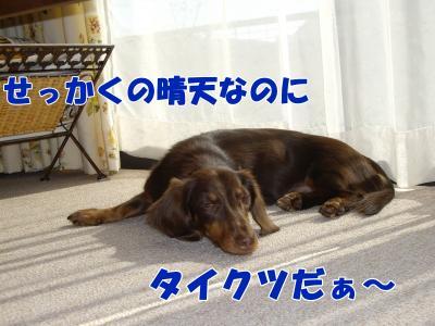 IMGP5612_convert_20081112230106.jpg
