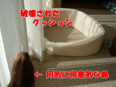 IMGP5753_convert_20081121161358.jpg