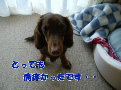 IMGP5824_convert_20081202105119.jpg