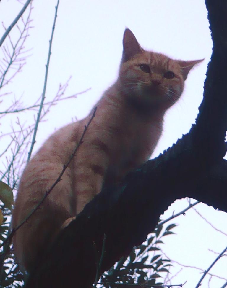 花園神社猫