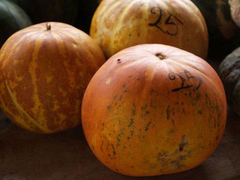 かぼちゃメロン