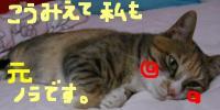20060513164651.jpg