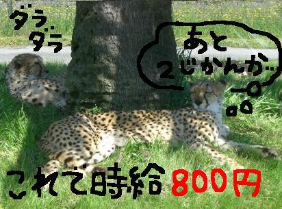 20060521152904.jpg