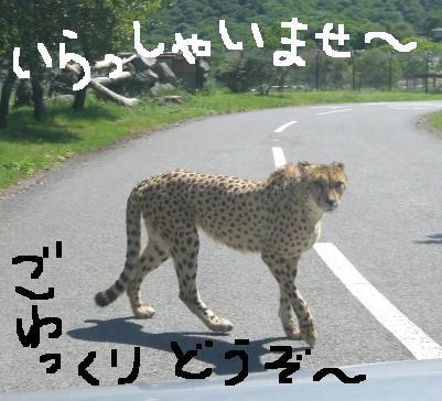 20060521155136.jpg