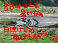 20060523155007.jpg