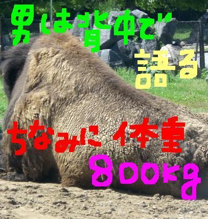 20060523164844.jpg