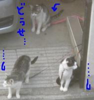 20060615013341.jpg