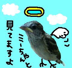 20060705153348.jpg