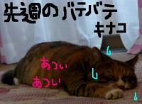 20060907011732.jpg