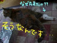 20061027005750.jpg
