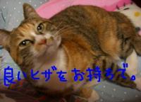 20061114010035.jpg