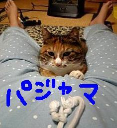 20070309012047.jpg