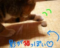 20070413005610.jpg