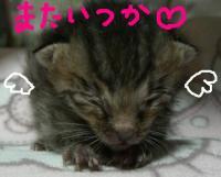 20070521003206.jpg