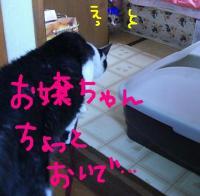 20070617161945.jpg