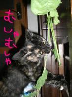 CIMG3035_20071211012332.jpg