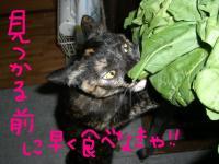 CIMG3053_20071211012513.jpg