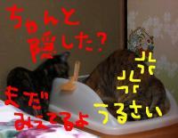 CIMG3295.jpg