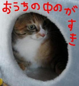 CIMG3569.jpg