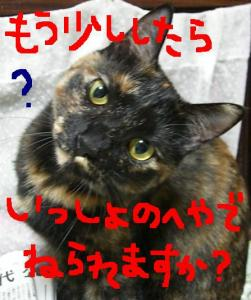 CIMG3636.jpg