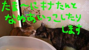 CIMG3648.jpg