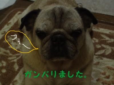 20070811205440.jpg