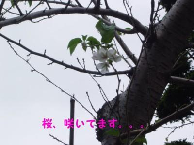 DSC01675-1.jpg