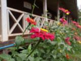 工事前の平屋校舎の花壇