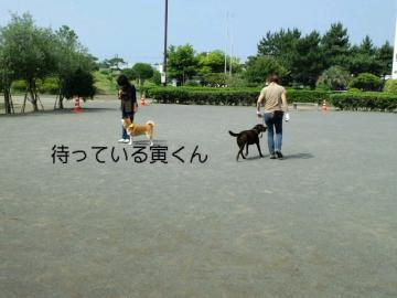 PAP_0030_20090619104155.jpg