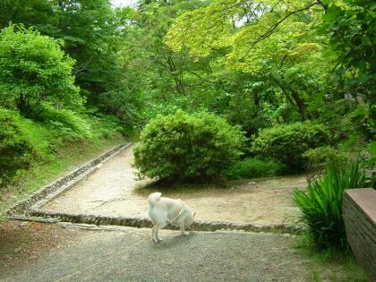 お山の公園 1