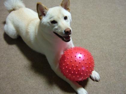 大きなボール
