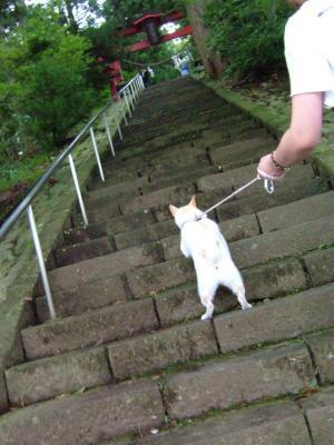 階段を上ります