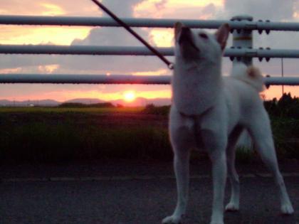 夕日とあずき