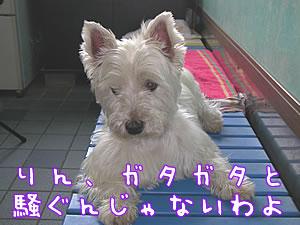 20050717-pm01.jpg