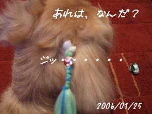 2006_01250002.jpg