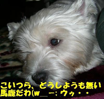 20070101032048.jpg