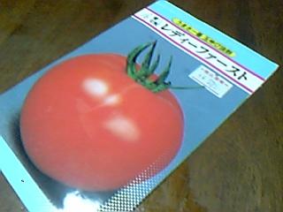 トマト(レディーファースト 種)