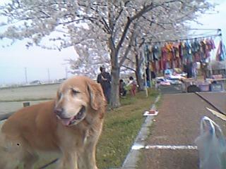 平和町桜祭り2