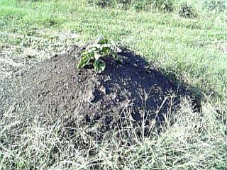 畑UNOの堆肥