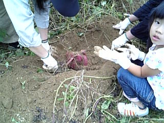 芋掘り(家族Cさん)