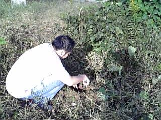 シェフ芋掘り