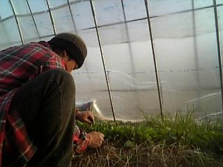耕作人作業中