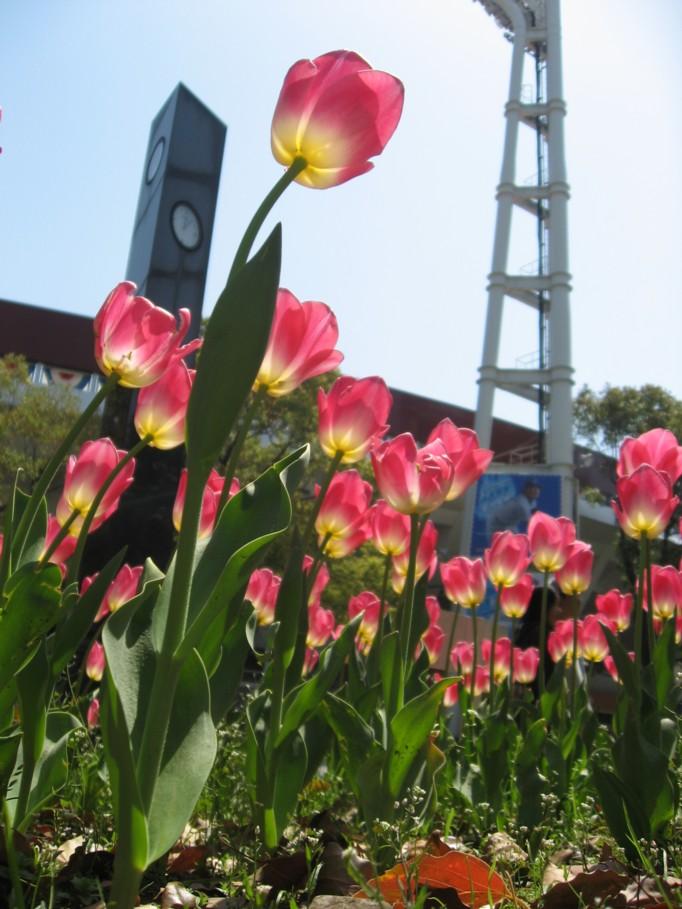横浜スタジアム(春)