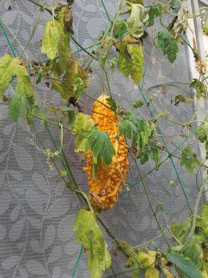 秋のお庭3