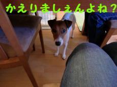 CIMG0362.jpg