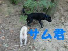 CIMG0384.jpg